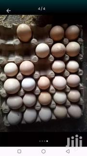 Fertilized Eggs | Other Animals for sale in Central Region, Wakiso
