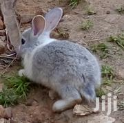 Rabbits On Sale | Other Animals for sale in Central Region, Wakiso