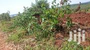 Free Hold Land on Sale | Land & Plots For Sale for sale in Central Region, Nakasongola