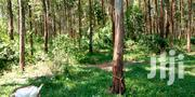 Aproject Of Ten Acres Of Eucaryptus Trees Aged At Five Years Of Growth | Land & Plots For Sale for sale in Central Region, Kampala