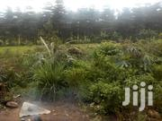 2 Titled Acres Of Very Fertile Land In Bujjuko 4.5km From The Main | Land & Plots For Sale for sale in Central Region, Mpigi