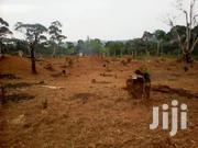Land For Rent. Suitable For Farming | Land & Plots for Rent for sale in Central Region, Mukono