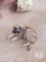 Baby Male Mixed Breed | Dogs & Puppies for sale in Central Region, Kampala