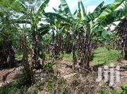 Land for Sale in Kikyusa Luwero   Land & Plots For Sale for sale in Central Region, Luweero