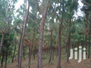 15.5 Acres Of Land With Trees For Sale In Butiiti, Kyenjojo District. | Land & Plots For Sale for sale in Western Region, Kyenjojo