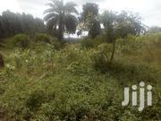 50 Titled Acres In Kakooge Luweero 65 Miles From Kampala At 2.5M Each | Land & Plots For Sale for sale in Central Region, Luweero