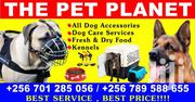 The Pet Planet | Dogs & Puppies for sale in Central Region, Kampala