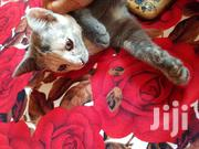 Black Female Cat | Dogs & Puppies for sale in Central Region, Kampala