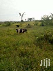 Land Touching Ariver | Land & Plots For Sale for sale in Central Region, Luweero