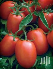 Fresh Tomatoes | Automotive Services for sale in Central Region, Mukono