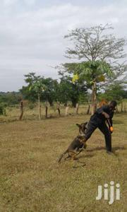 Vaccination And Deworming VET. SERVICE | Dogs & Puppies for sale in Central Region, Kampala