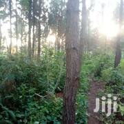 63 Acres Of Land With Pine Trees For Sale | Land & Plots For Sale for sale in Central Region, Luweero