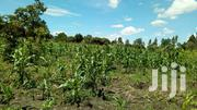 6acres Of Land In Mukono-kabimbiri Good For All Agriculture All At 20m | Land & Plots For Sale for sale in Central Region, Mukono