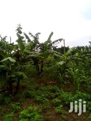Land For Sale In Kikyusa, Luwero | Land & Plots For Sale for sale in Central Region, Kampala