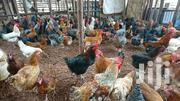 Chicken | Other Animals for sale in Central Region, Kampala