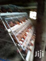 Cages   Other Animals for sale in Central Region, Kampala