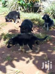 Gsd Pups | Dogs & Puppies for sale in Central Region, Kampala