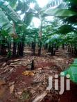 6.5  Acres Of Banana Plantation In Kikyusa | Land & Plots For Sale for sale in Kampala, Central Region, Nigeria