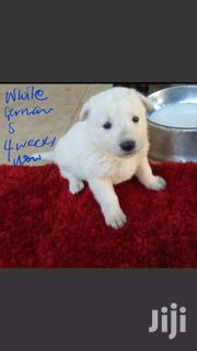 White German Shepherd Puppy | Dogs & Puppies for sale in Central Region, Kampala