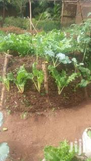For Gardening Services And Landscaping | Home Accessories for sale in Central Region, Kampala