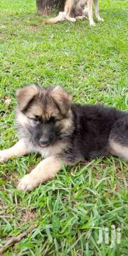 Long Cot | Dogs & Puppies for sale in Central Region, Kampala
