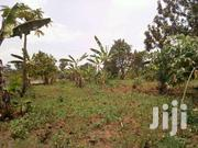 100 Acres Of Land On Sale In Nakasongoala Each At 2m | Land & Plots For Sale for sale in Central Region, Nakasongola