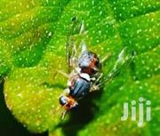 Fruit Fly Traps (Pheromone Based) | Automotive Services for sale in Central Region, Kampala