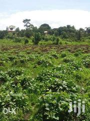 20 Acres Of Land On Sale In Kisoga Each Is At 20m | Land & Plots For Sale for sale in Western Region, Kisoro