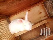 Rabbits | Other Animals for sale in Central Region, Kampala