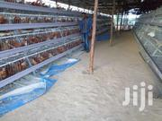 POULTRY CAGES | Commercial Property For Sale for sale in Central Region, Kampala