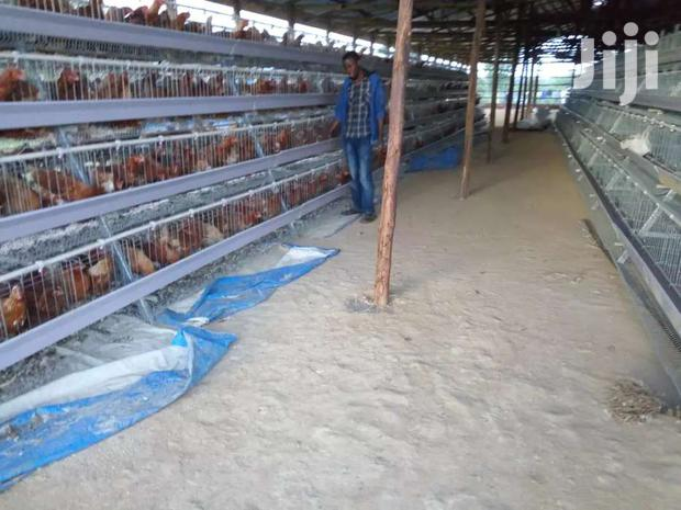 Archive: POULTRY CAGES
