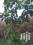 Land 6 Acres In Buloba With House And Garden Of Different Crops | Land & Plots For Sale for sale in Kampala, Central Region, Nigeria