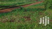 50ft X 100ft Private Milo Titled Plots for Sale in Jinja - Njeru | Land & Plots For Sale for sale in Eastern Region, Jinja