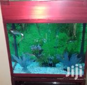 Aquarium In All Sizes | Fish for sale in Central Region, Kampala