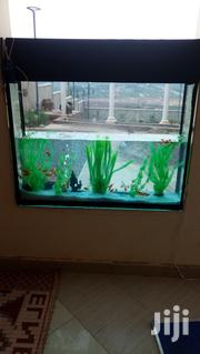 Aquarium at Affordable Rates | Fish for sale in Central Region, Kampala