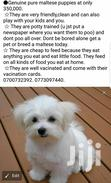 Maltese Puppys   Dogs & Puppies for sale in Kampala, Central Region, Uganda