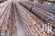 Chicken Cages At 1.2m | Farm Machinery & Equipment for sale in Central Region, Kampala