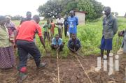 Agronomist | Farming & Veterinary CVs for sale in Nothern Region, Gulu
