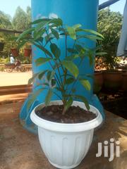 Take One Flower Home And Change The Environment | Garden for sale in Central Region, Kampala
