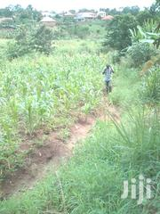 4 Acres Agricultural Land for Sale at Wasinga 8km Off Katosi Road | Land & Plots For Sale for sale in Central Region, Mukono