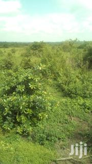 Fertile For Farming And Rearing | Land & Plots For Sale for sale in Central Region, Luweero