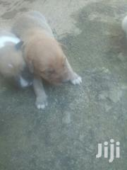 Alert Puppies | Dogs & Puppies for sale in Central Region, Kampala