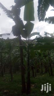 Banana Plantations And Free Land For Sale | Feeds, Supplements & Seeds for sale in Western Region, Mbarara