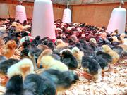 Chicks Of All Ages | Other Animals for sale in Central Region, Wakiso