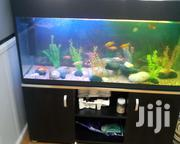 Aquarium On A Wooden Stand | Pet's Accessories for sale in Central Region, Kampala