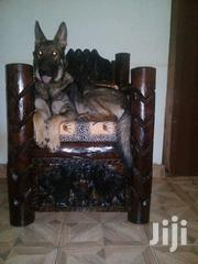 Nice En Great Sebbo Dog | Dogs & Puppies for sale in Central Region, Kampala