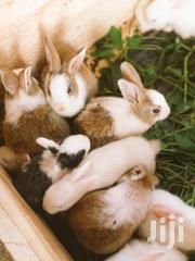 Rabbits And Bunnies | Other Animals for sale in Central Region, Kampala