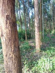 Kalitunsi 5years Old For Sale On 10acres Land | Advertising & Marketing Jobs for sale in Central Region, Mubende