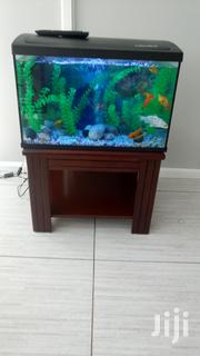 Aquarium On Wooden Stand | Fish for sale in Central Region, Kampala