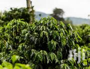 Coffee Plantation | Garden for sale in Central Region, Sembabule
